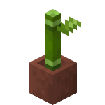 Potted Bamboo<br>