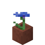 Potted Cornflower<br>